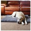 40 Winks Bone Plush Mattress for Dogs - 107cm x 71cm